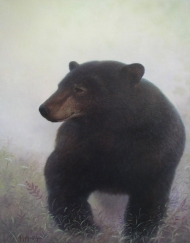 Ursus Major
